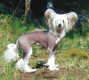hairless horse | snarkyrider