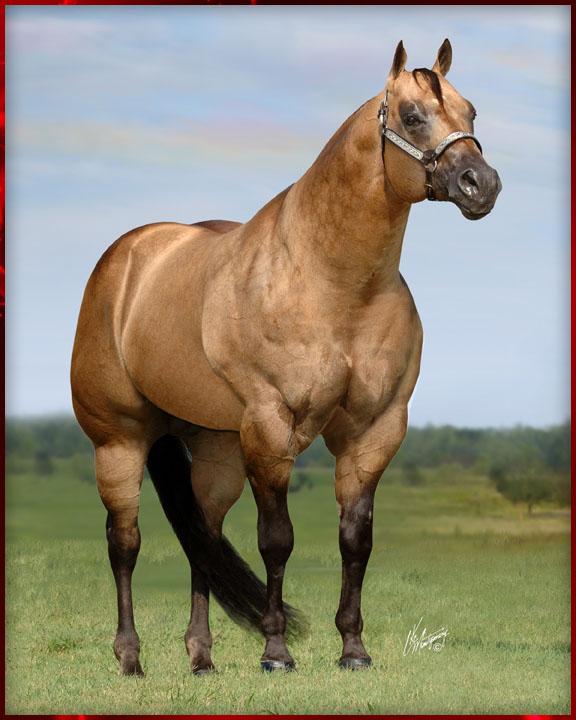 halter horses on steroids