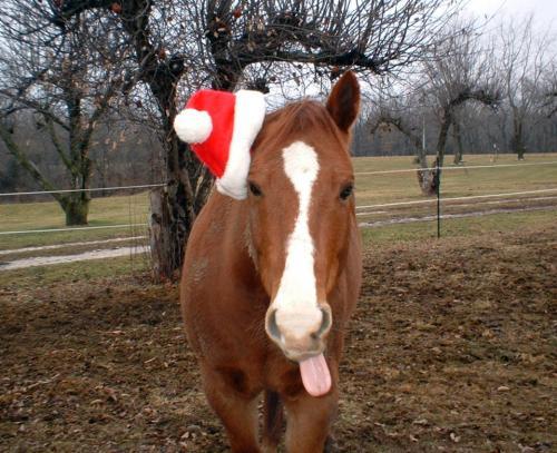 christmas horse | snarkyrider