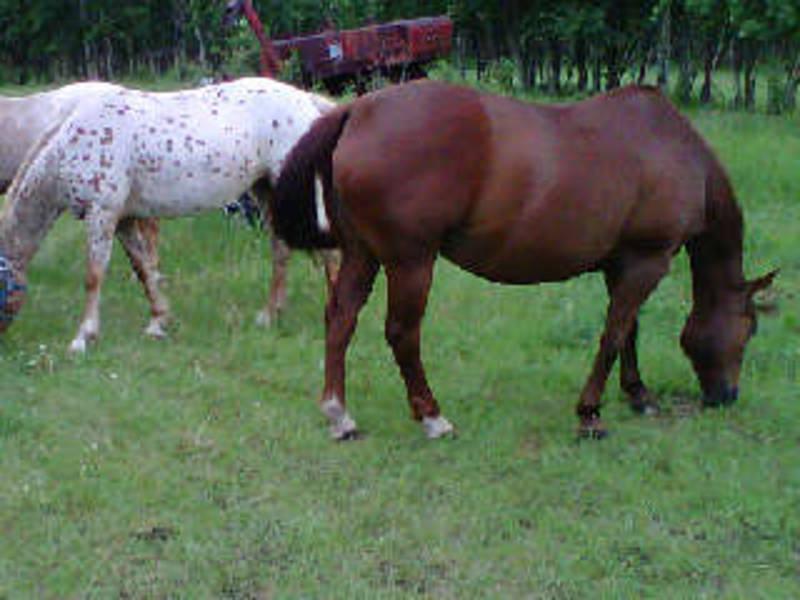 backyard breeders snarkyrider